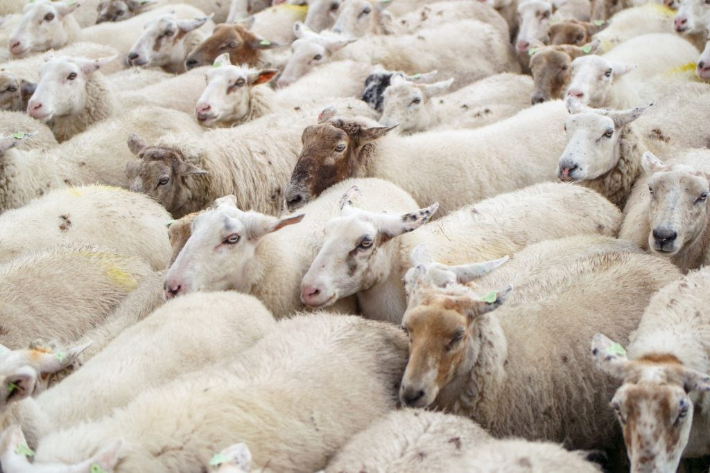 lana en fábrica de tejidos